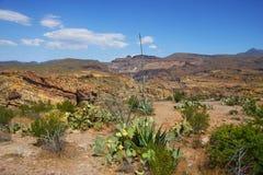Wüsten-Frühling Stockbild