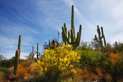 Wüsten-Frühling Stockfotografie