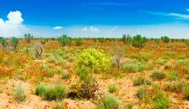 Wüsten-Frühling mit blühenden Mohnblumen stockfoto