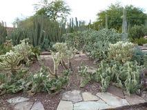 Wüsten-Garten-Szene Lizenzfreie Stockfotos