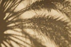Wüsten-Hintergrund Lizenzfreies Stockfoto