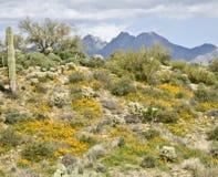 Wüsten-Kaktus, Blumen und Berge Stockbilder