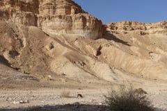 Wüsten-Klippen Stockfotos