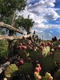 Wüsten-Landschaft Lizenzfreies Stockfoto