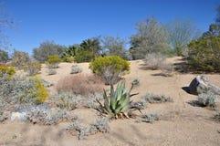 Wüsten-Landschaft Lizenzfreie Stockbilder