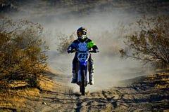Wüsten-Rennläufer Lizenzfreies Stockbild