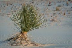 Wüsten-Schönheit Lizenzfreie Stockfotos