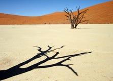 Wüsten-Schatten Stockfotografie