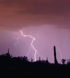Wüsten-Schlag Stockfoto