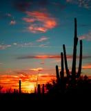 Wüsten-Sonnenuntergang stockbilder