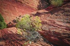 Wüsten-Unkraut Stockfotos