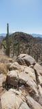 Wüsten-vertikale Panorama-Landschaft mit blauem Himmel und Kaktus Lizenzfreie Stockbilder