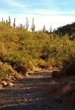 Wüsten-Wanderweg Stockfoto