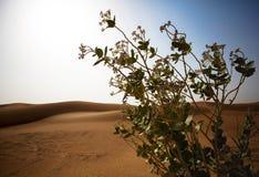 Wüstenansicht mit Grüns Lizenzfreie Stockfotos