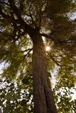 Wüstenbaum lizenzfreies stockbild