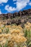 Wüstenblumenwachsen nahe den Klippen Lizenzfreie Stockfotos
