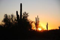 Wüstendünen in Dubai Lizenzfreie Stockbilder