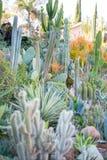 Wüstengarten mit Succulents Stockbild