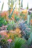 Wüstengarten mit Succulents Lizenzfreies Stockfoto