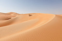 Wüstenlandschaft in Abu Dhabi Stockbild