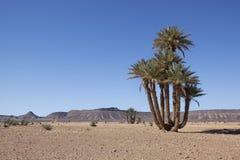 Wüstenlandschaft mit Datumpalmen und -bergen. Lizenzfreie Stockfotografie