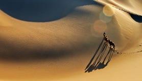 Wüstenlandschaft mit gehenden Kamelen stockbild