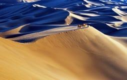 Wüstenlandschaft mit gehenden Kamelen stockfotografie