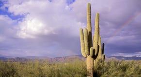 Wüstenlandschaftsaguarokaktus und -regenbogen Lizenzfreies Stockfoto