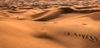 Wüstensonnenuntergangbelichtung nahe Dubai, Vereinigte Arabische Emirate lizenzfreie stockfotografie