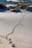 Wüstensonnenunterganglandschaft Stockbild
