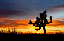 Wüstensonnenuntergangsammlung stockbild