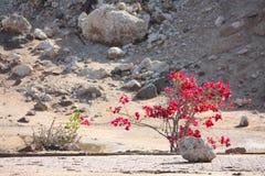 Wüstensteine und geblühter Baum Stockfoto