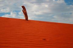 Wüstensteuerknüppel Stockfoto