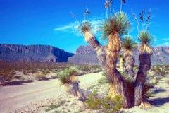 Wüstenstraße zum Rio Grande Stockbilder