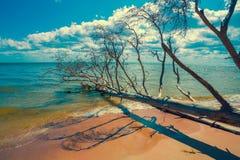 Wüstenstrand mit gefallenen toten Bäumen lizenzfreie stockfotografie