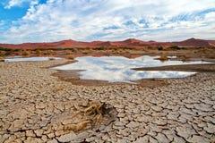 Wüstenszene mit Wasser Stockfotografie