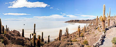 Wüstenvegetation auf Incahuasi Stockbild