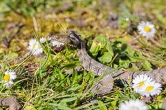 Wąż, żmija Zdjęcia Royalty Free