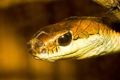 wąż Obrazy Stock