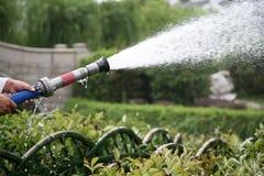 wąż do oprysków upraw wody. Obrazy Royalty Free
