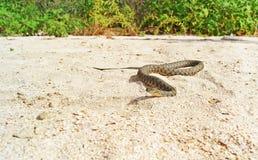 Wąż na plaży Obrazy Royalty Free