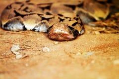Wąż na ziemi Fotografia Royalty Free