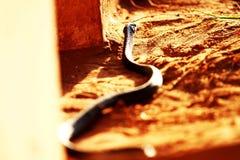 Wąż na ziemi Obraz Stock