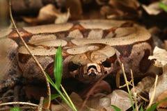 Wąż przy lasem zdjęcia stock