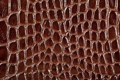 wąż rzemienna tekstura Fotografia Royalty Free
