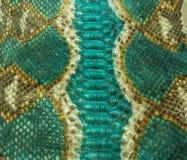 Wąż skóra Zdjęcie Stock