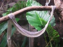 Wąż skóra Opuszczać Behind Fotografia Royalty Free