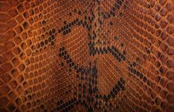 Wąż skóra pattern Fotografia Royalty Free