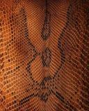 Wąż skóra pattern Obrazy Royalty Free