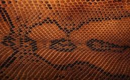 Wąż skóra pattern Zdjęcia Stock